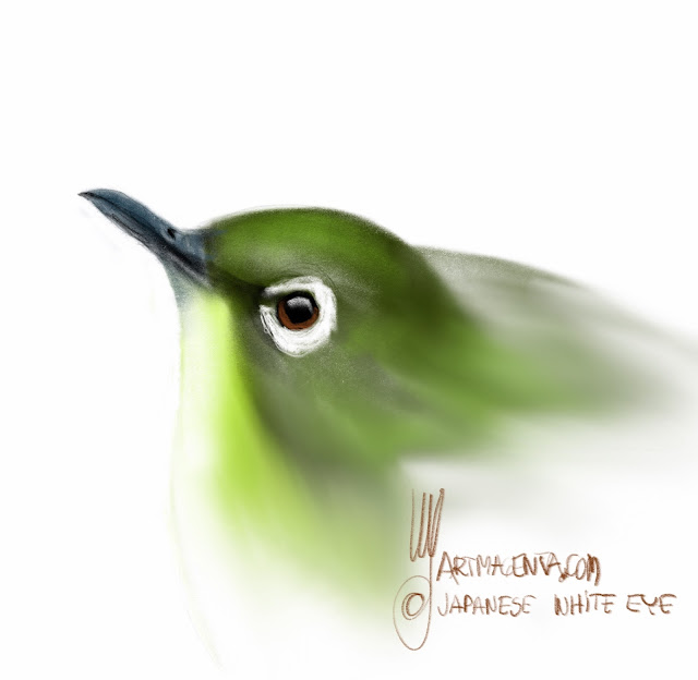 Japanese White Eye is a bird painting by Artmagenta