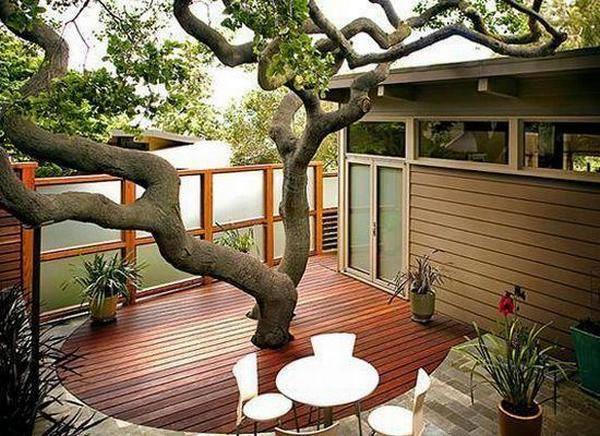 ปลูกต้นไม้ระเบียงบ้าน