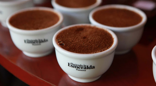 panama-kahvesi