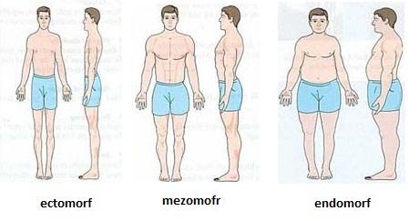pierde greutate tipul corpului ectomorph