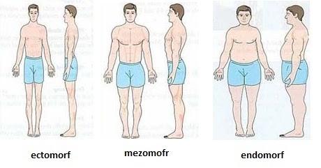 pierde în greutate ectomorf