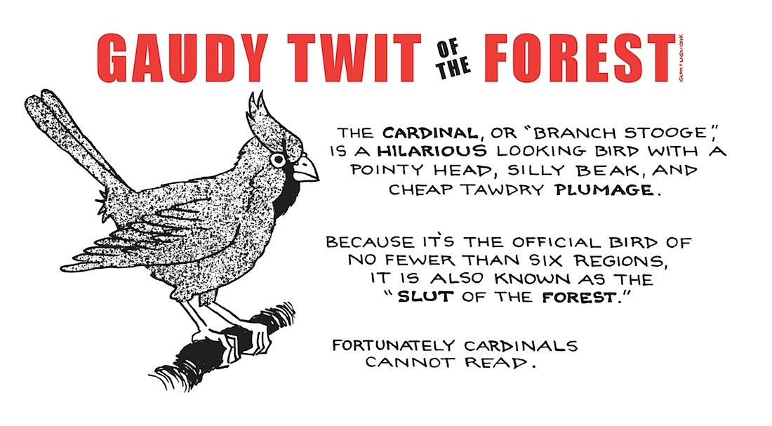 nature parody about cardinal bird, animal cartoon