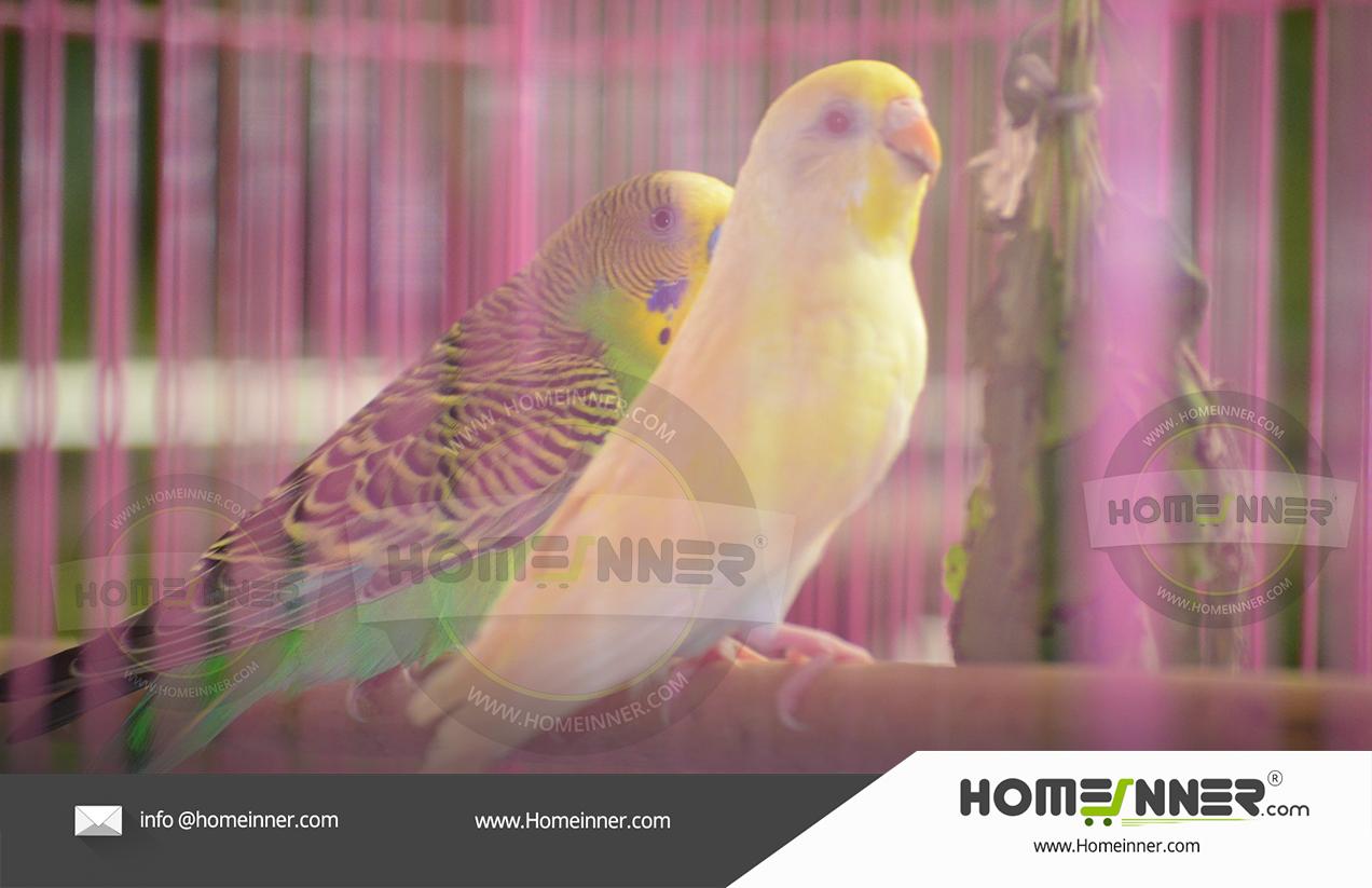 Budgies Love Birds Vadakara Calicut
