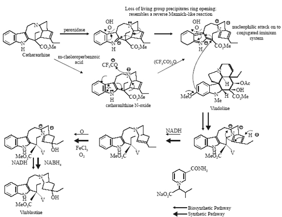 Strychnine- found in the seeds of Strychnos Nux Vomica