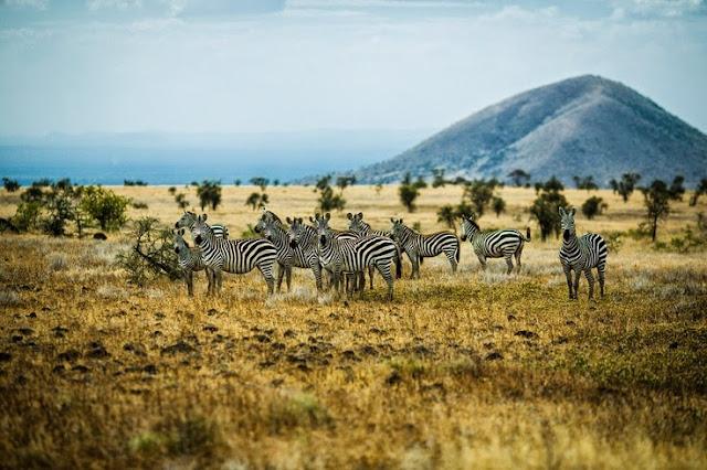 J.CREW's Summer Adventure in Africa - Fashion Island