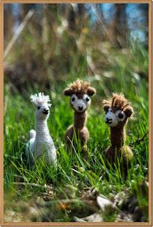 Alpaczki na wycieczce :)