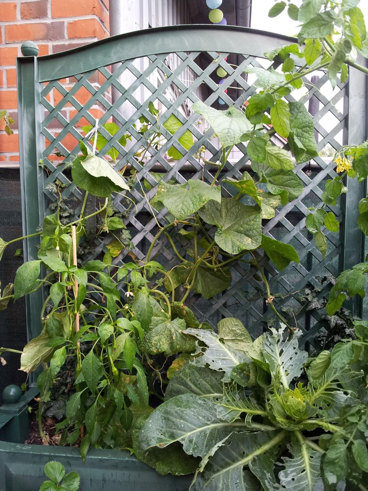große pflanzkübel winterhart – wohn-design