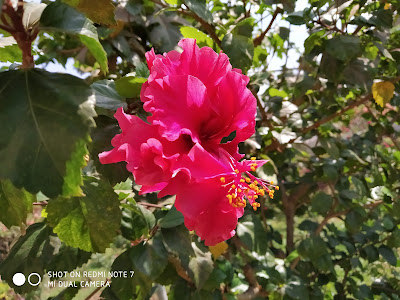Redmi Note 7 Camera Samples