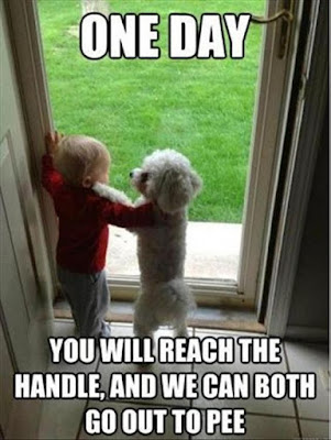Dog humor : One Day...