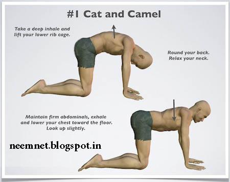 neemnet back pain relief exercise and yoga