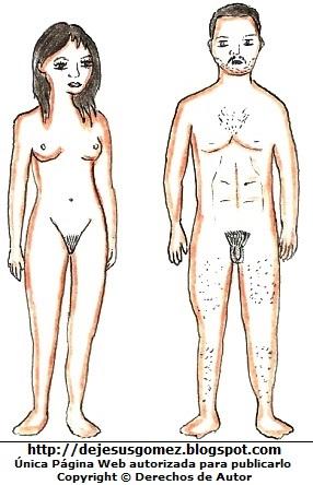 Dibujo del cuerpo humano adultos (mujer y hombre) por Jesus Gómez