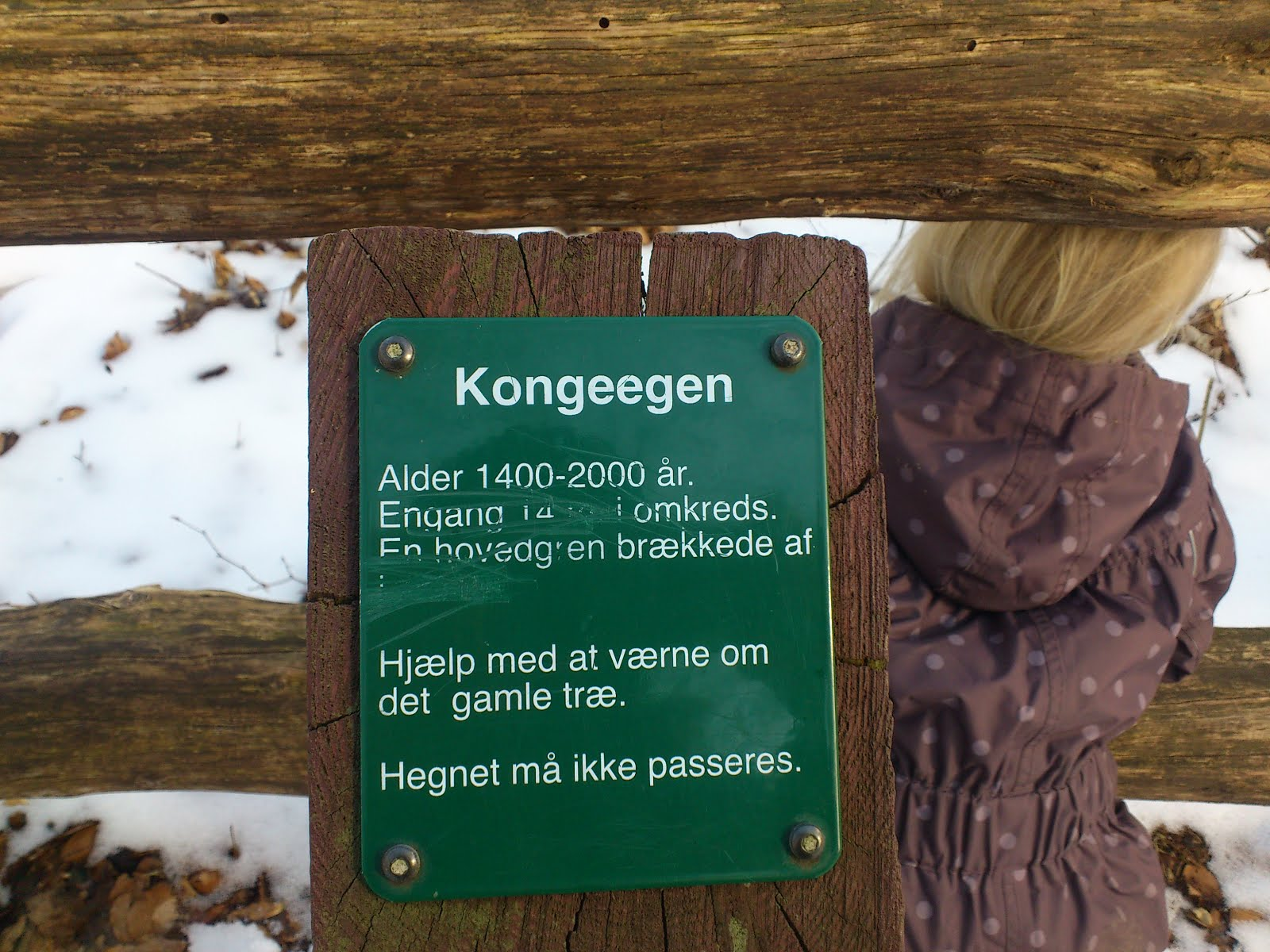 kongeegen kort Johansens Journaler: Kongeegen