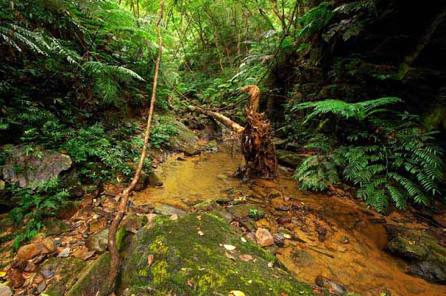 muddy water, stream,jungle,rocks