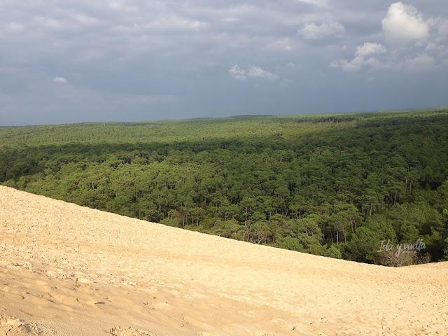 Duna de Pilat arena y bosque