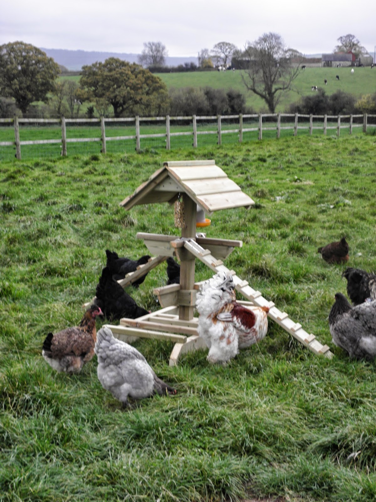 Poultry Activity Centre