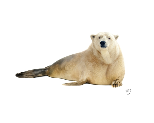 05-Polar-Bear-Seal-Sarah-DeRemer-You-Are-what-You-Eat-Photo-Manipulation-www-designstack-co