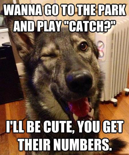 Funny and cool animal memes