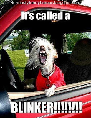 dog-bark-car-called-blinker