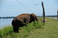 Er weiß genau, dass der Elefantenzaun an der Straße unter Strom steht. He knows that's a live wire.