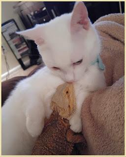 meme kucing kocak  meme kucing numpang lewat  meme lucu  meme comic spongebob  meme kucing kaskus  meme comic jkt48  meme kucing galau  meme kucing sedih