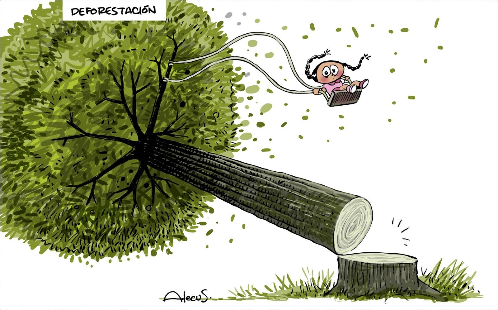 Alecus: Deforestación