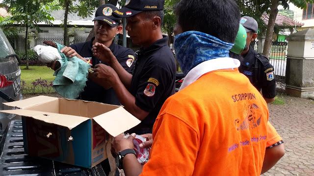 Elang Bondol Disita dari rumah pegawai Pemda DKI Jakarta