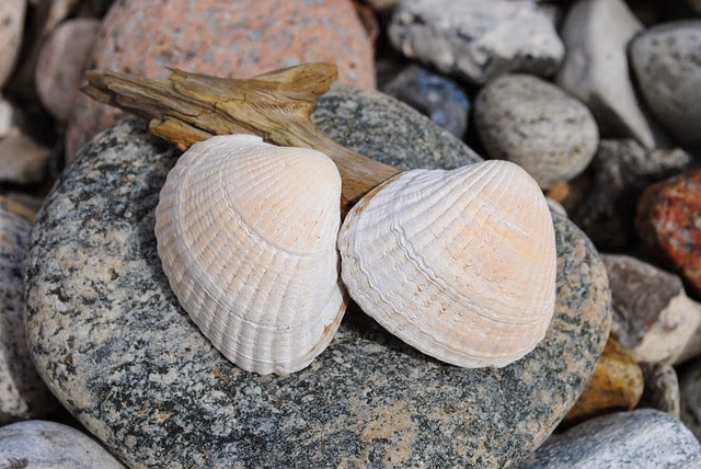 Clamshells on the Beach (Pixabay)