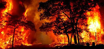 Recomendaciones básicas para evitar incendios forestales. Ver. Oír. Contar. ACTUALIDAD