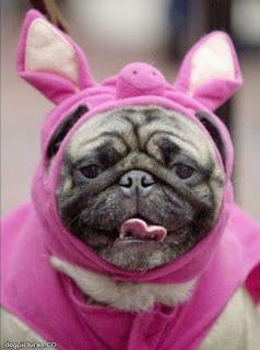 Pug disfrazado de cerdito