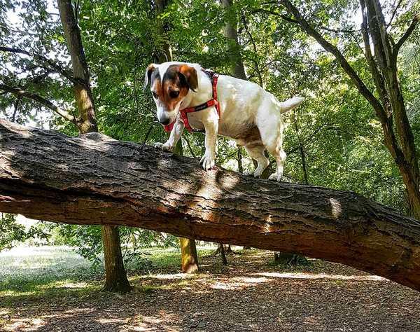 Pouvez-vous aider les chiens qui ont le vertige ?