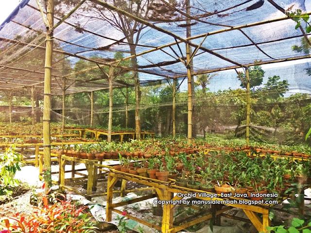 Wisata Kampung Anggrek