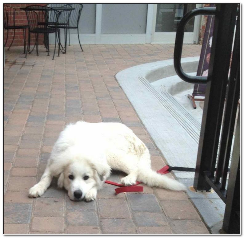 Dog Friendly Hotels Asheville North Carolina