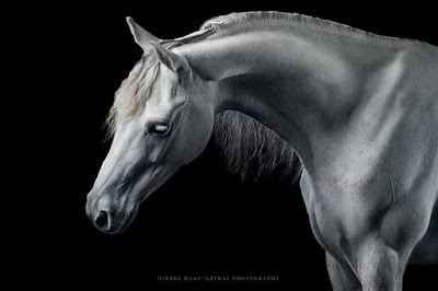 imagenes-caballos-fotos-artisticas-wiebke-haas