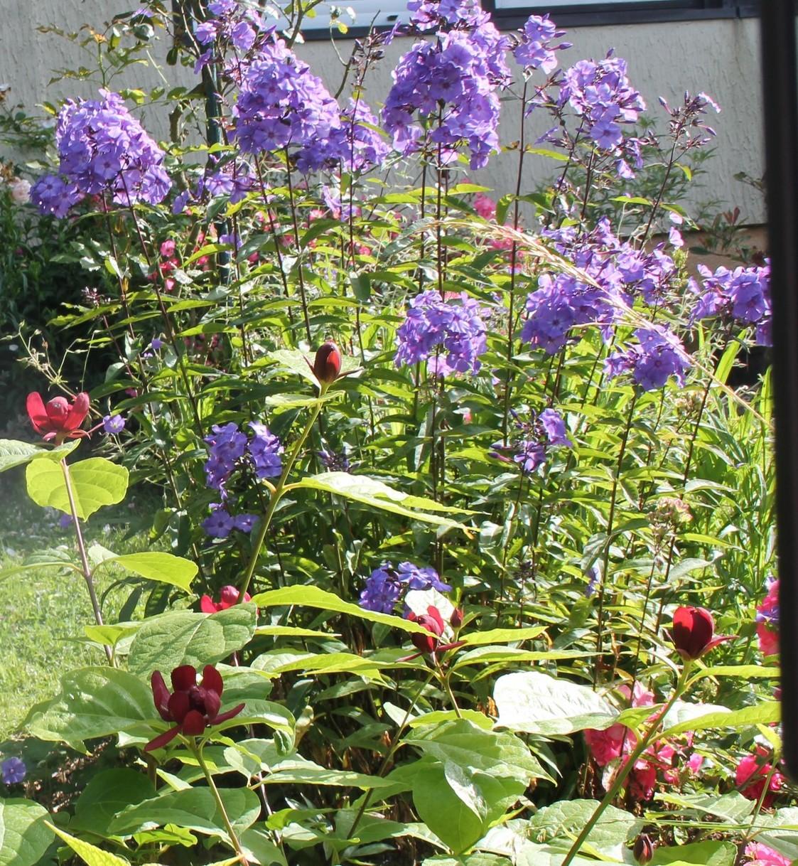 Doubs jardin petit tour au jardin 1 for Jardin 5 juillet biskra