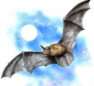 Dibujo del murciélago
