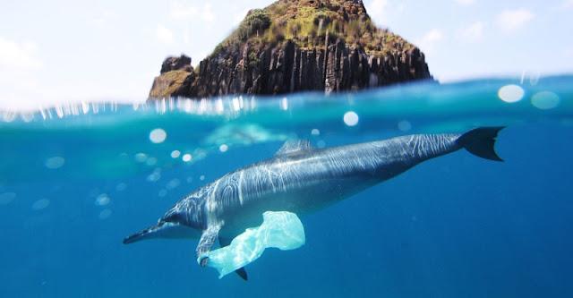Golfinho com plástico