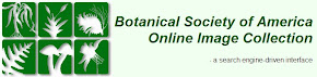 Botanical Society of America Online Image Collection