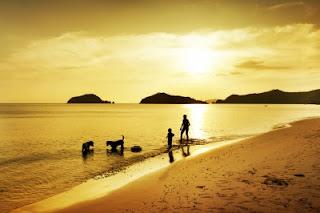 Pai-filho-e-dois-cães-na-água-da-praia