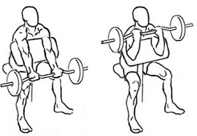 preacher curl for biceps