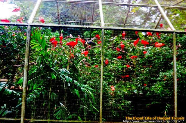 bowdywanders.com Singapore Travel Blog Philippines Photo :: Singapore :: Jurong Bird Park – Where Color Lives