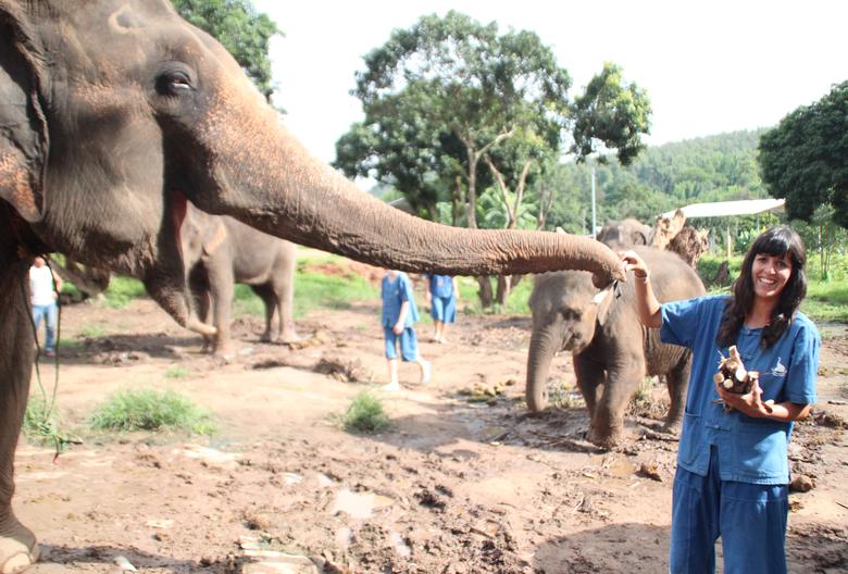 Darle de comer a Elefantes