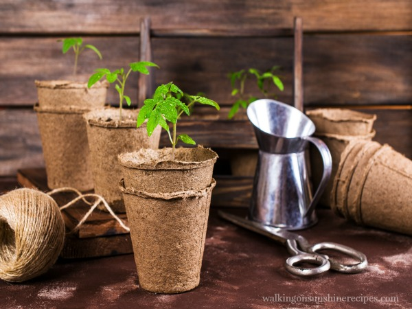 Peet Pot Containers are an easy way to start seeds indoors for a great garden from Walking on Sunshine.