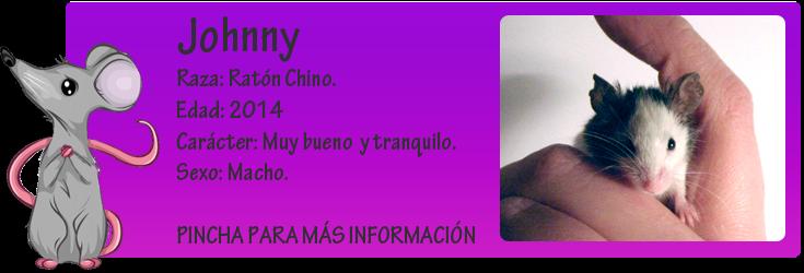 http://almaexoticos.blogspot.com.es/2015/01/johnny-el-ratas-mas-pequeno-y-adorable.html