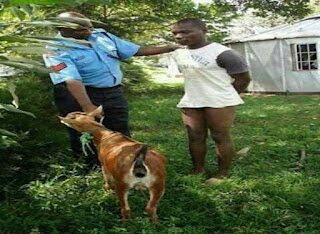 A kiambu man caught by neighbours sleeping with a goat.