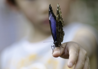 "Image ""Blue Butterfly"" courtesy of dan at www.freedigitalphotos.net"