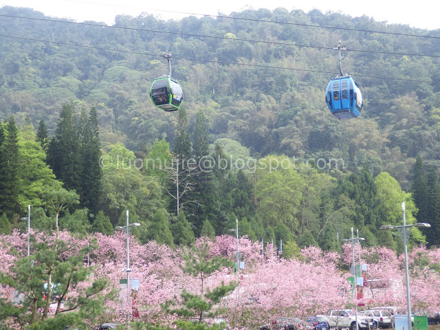 Sun Moon Lake cherry blossom