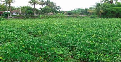 Seberapa banyak Anda ketahui wacana Sayur Organik Pertanian Organik dan Pengertian Sayur Organik