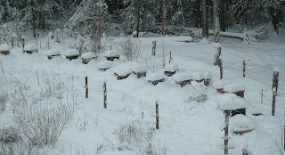 Τι κάνουν οι μέλισσες όταν χιονίζει και τι μπορεί να κάνει ο μελισσοκόμος για να τις προστατέψει!!!