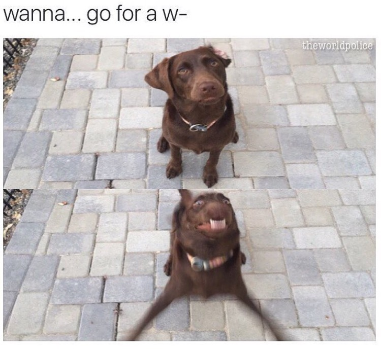 Wanna... go for a w- dog funny picture