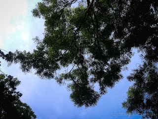 Natural Branches And Wild Tree Leaves And The Sky At Banjar Tegeha Village, North Bali, Indonesia